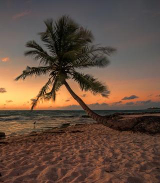 Mexican Beach - Obrázkek zdarma pro Nokia C-5 5MP