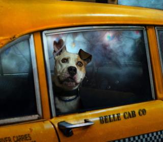 Yellow Cab Dog - Obrázkek zdarma pro 320x320