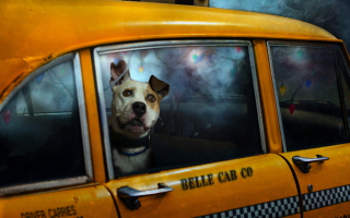 Yellow Cab Dog Wallpaper for Android, iPhone and iPad