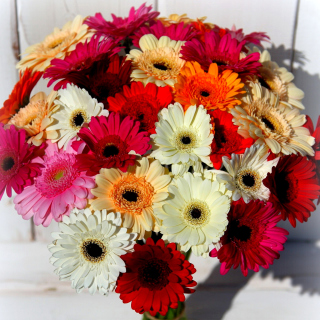 Bouquet of colorful gerberas - Obrázkek zdarma pro 208x208