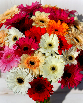 Bouquet of colorful gerberas - Obrázkek zdarma pro 176x220