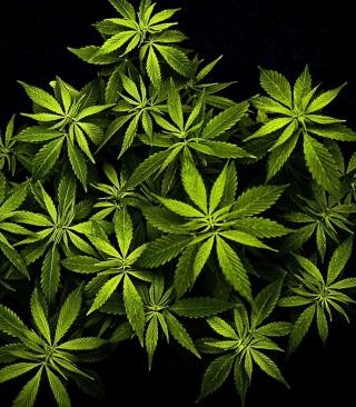 Cannabis Mary Jane - Obrázkek zdarma pro Nokia Asha 308