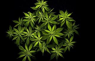Cannabis Mary Jane - Obrázkek zdarma pro HTC One