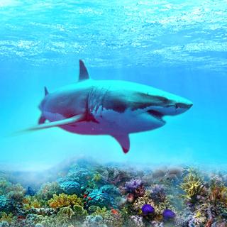 Great white shark - Obrázkek zdarma pro 2048x2048