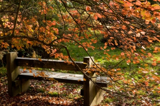 Free Autumn Bench Picture for Android, iPhone and iPad