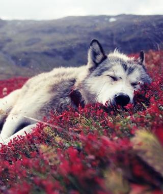 Wolf And Flowers - Obrázkek zdarma pro 768x1280