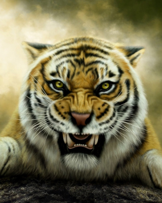 Angry Tiger HD Wallpaper for Nokia C5-05