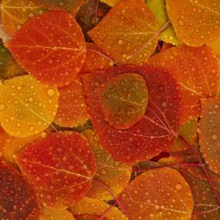 Autumn leaves with rain drops - Obrázkek zdarma pro 2048x2048