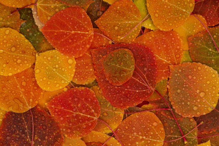 Autumn leaves with rain drops wallpaper