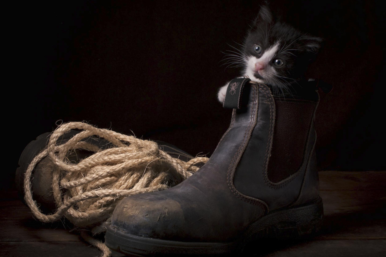 котенок в ботинке  № 2016597 загрузить