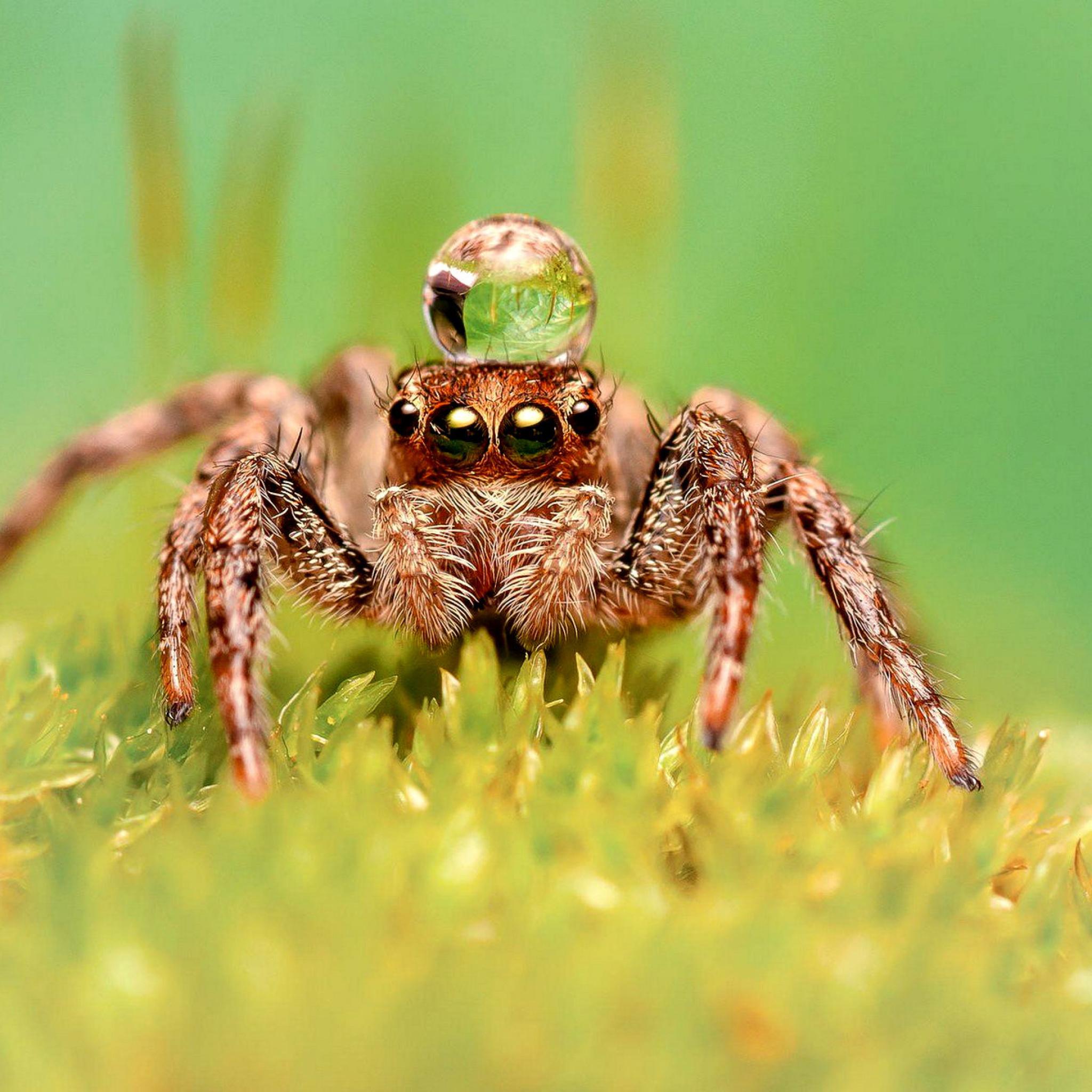 природа животные паук  № 2544174 загрузить