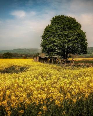 Field in Belarus - Obrázkek zdarma pro iPhone 5