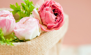 Peonies Wallpaper for Android, iPhone and iPad