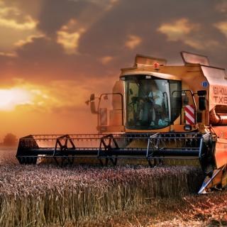 Autumn Wheat Cereal - Obrázkek zdarma pro 1024x1024