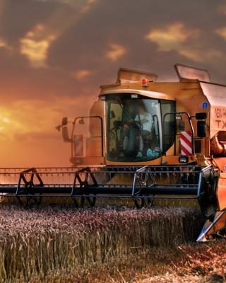 Autumn Wheat Cereal - Obrázkek zdarma pro 360x400