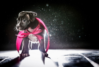 Cute Puppy In Pink Cloak Picture for Android, iPhone and iPad