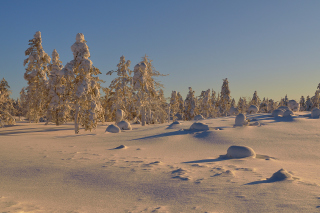 Thaw in Winter Morning Picture for Android, iPhone and iPad