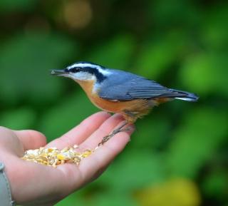 Feeding Bird - Obrázkek zdarma pro 128x128