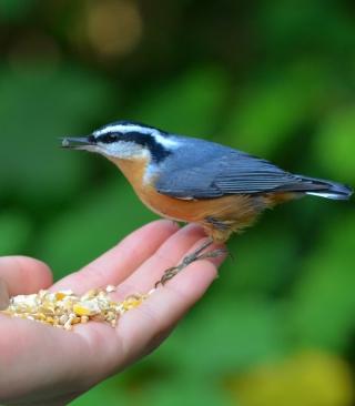 Feeding Bird - Obrázkek zdarma pro 352x416