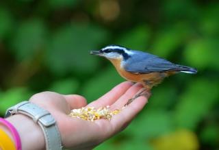 Feeding Bird - Obrázkek zdarma pro Desktop Netbook 1366x768 HD