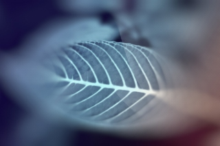 Free Leaf Picture for Android, iPhone and iPad