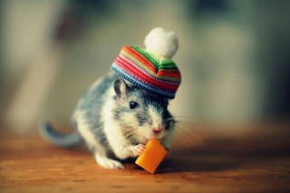 Mouse In Funny Little Hat Eating Cheese Wallpaper for Android, iPhone and iPad