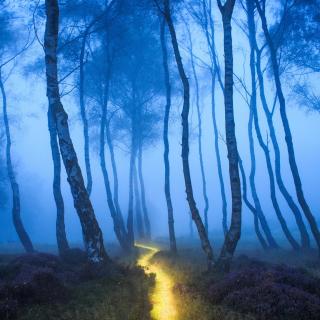 Magic Forest - Obrázkek zdarma pro iPad