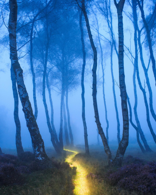 Magic Forest - Obrázkek zdarma pro Nokia Asha 306