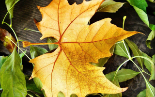 Yellow Foliage Wallpaper for Android, iPhone and iPad