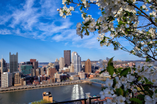 Pittsburgh Washington Background for Android, iPhone and iPad