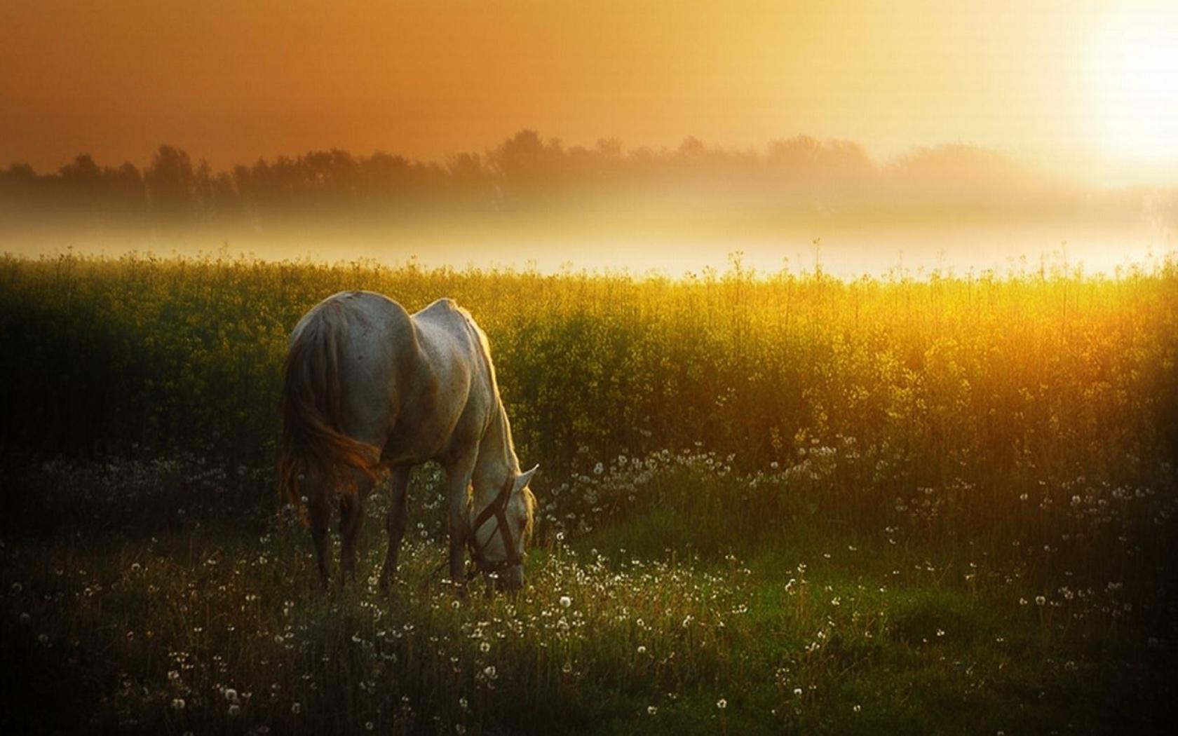 лошадь, трава, закат  № 2695  скачать