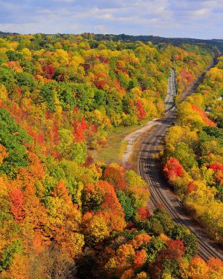 Autumn Forest in Kelowna - Obrázkek zdarma pro 132x176