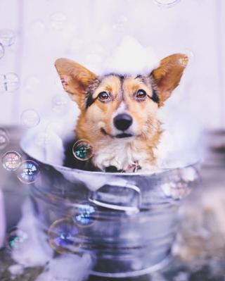 Dog And Bubbles - Obrázkek zdarma pro Nokia C3-01