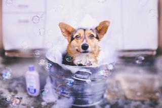 Dog And Bubbles - Obrázkek zdarma pro Fullscreen 1152x864