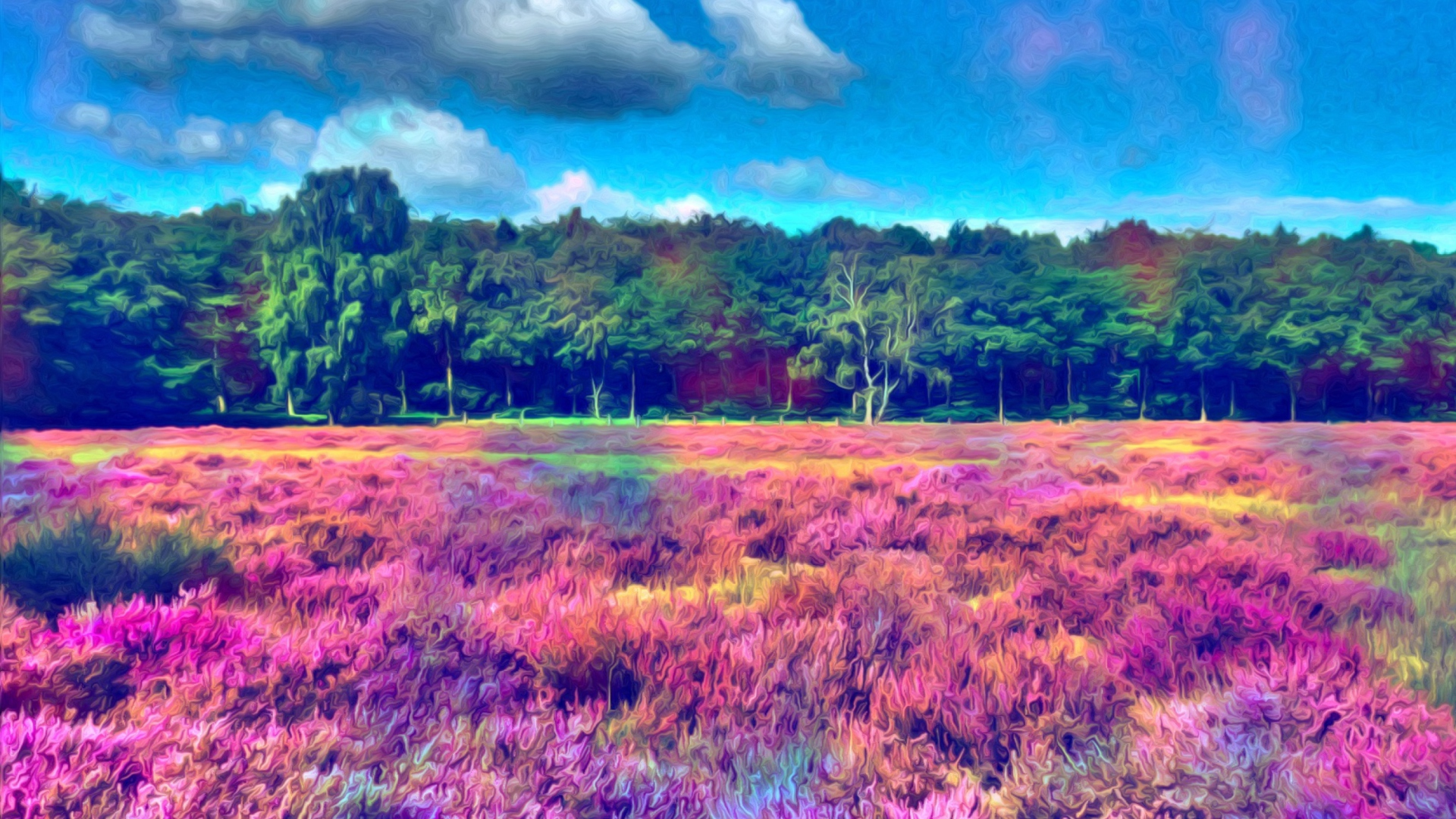 Field of color fondos de pantalla gratis para escritorio - Fondos full hd ...