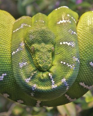 Emerald Green Tree Snake - Obrázkek zdarma pro Nokia X1-00