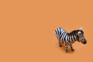 Free Zebra Toy Picture for Android, iPhone and iPad