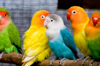 Colorful Parrots Background for Android, iPhone and iPad