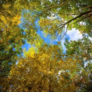 Sky and Trees - Obrázkek zdarma pro iPad 2