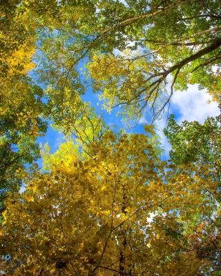 Sky and Trees - Obrázkek zdarma pro Nokia Asha 306