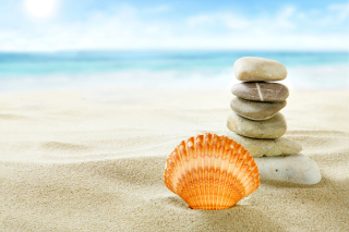 Sea Shells Beach Picture for Android, iPhone and iPad