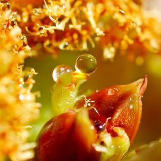 Flower with Drops - Obrázkek zdarma pro iPad 2