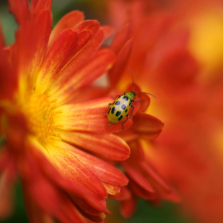 Red Flowers and Ladybug - Obrázkek zdarma pro iPad mini 2