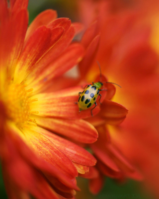 Red Flowers and Ladybug - Obrázkek zdarma pro 240x320
