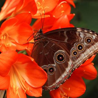 Butterfly - Obrázkek zdarma pro 208x208