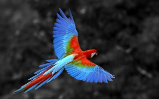 Free Macaw Parrot Picture for Android, iPhone and iPad