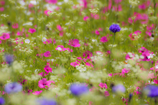 Free Pink Flowers Meadow Picture for Android, iPhone and iPad
