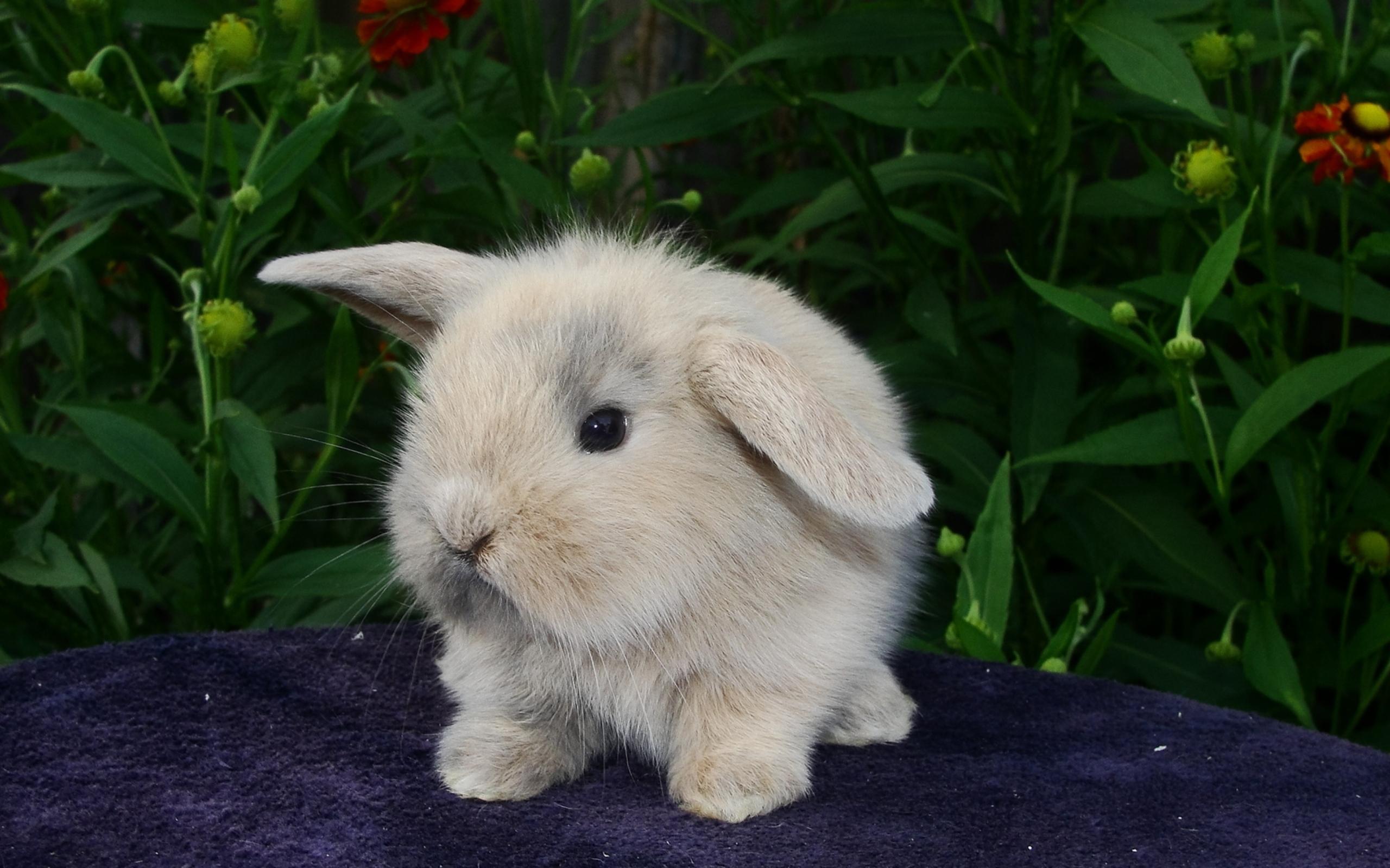испуганный кролик  № 367674  скачать