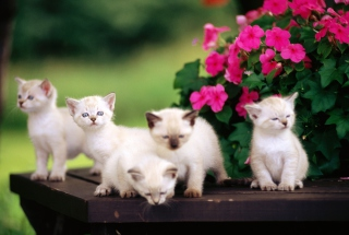 Cute Little Kittens Background for Android, iPhone and iPad