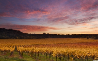 Russian River Valley California Picture for Android, iPhone and iPad